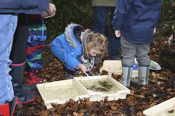 Little Seeds Forest School (Monday 28th Sept - AM)