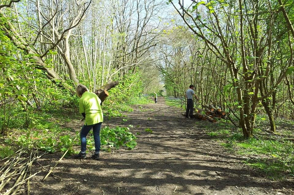 Coppicing Workshop